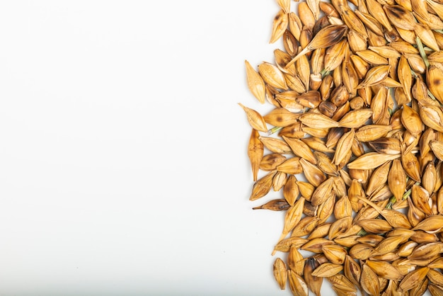 Malted and roasted barley on white background. top view