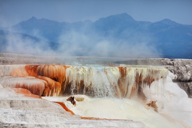 米国イエローストーン国立公園のマンモス温泉