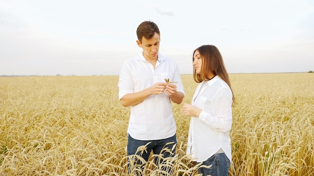 흰 셔츠를 입은 남자와 여자가 들판에서 익은 밀 이삭을 보고 있다