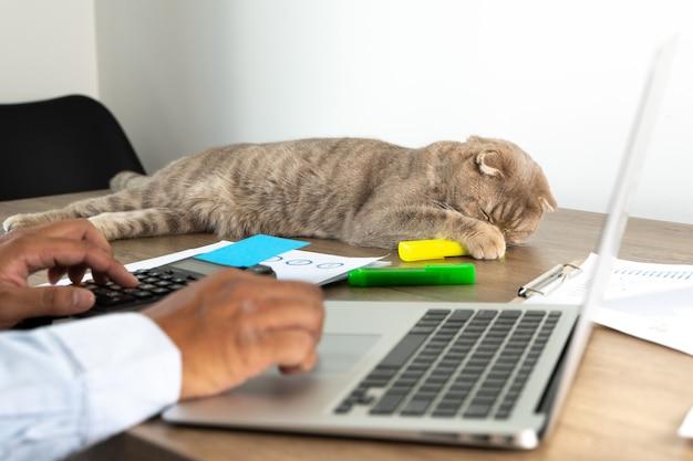人と猫は家から仕事をします距離研究の概念家の仕事スペースラップトップ