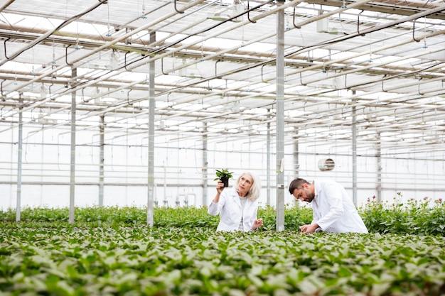 Мужчина и старшая женщина, работающая с растениями