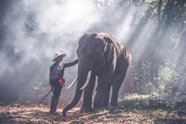 タイ北部の男と彼の象 Premium写真