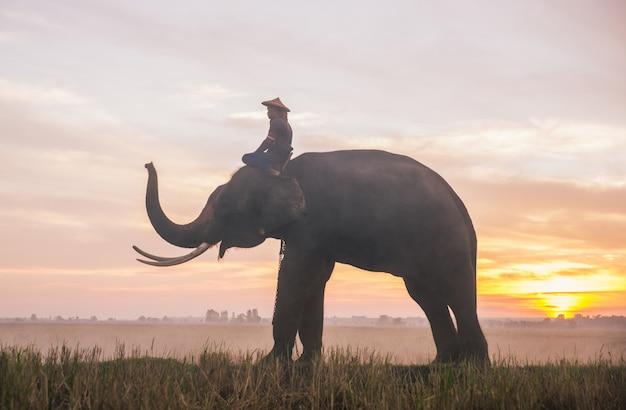タイ北部の田んぼで働く人と彼の象