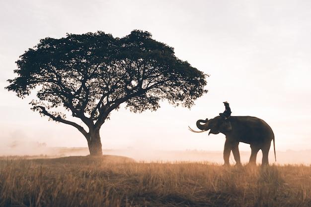 タイ北部の田んぼで働く人と彼の象 Premium写真