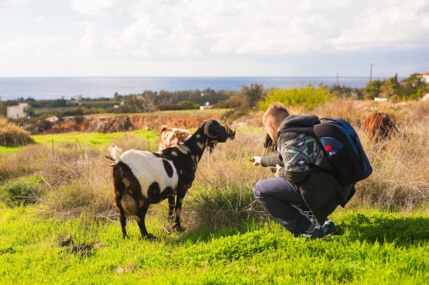 牧草地の男と子羊または山羊。
