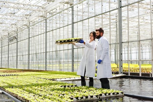 실험실 가운을 입은 남자와 여자는 온실에서 녹색 식물로 일합니다.