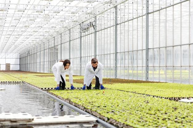 Мужчина и женщина в лабораторных одеждах работают с зелеными растениями в теплице