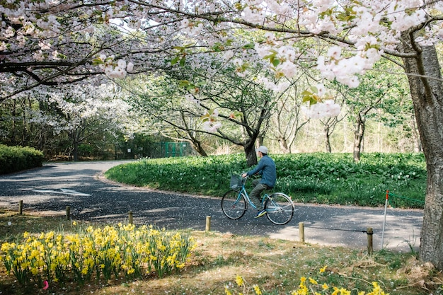 Man in bike on pathway in sakura park