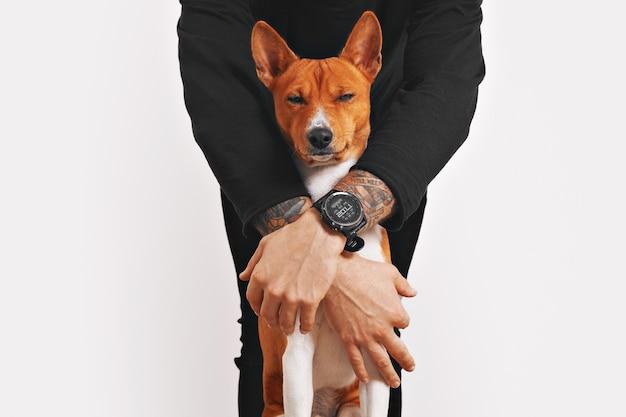 Un uomo in abiti neri sta proteggendo il suo bellissimo cane basenji marrone e bianco con la faccia gelida da qualsiasi pericolo, isolato su bianco