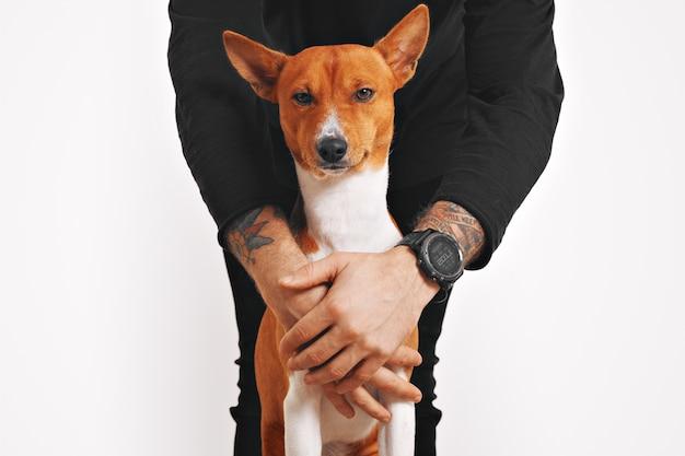 Un uomo in abiti neri sta proteggendo il suo bellissimo cane basenji rosso e bianco con la faccia sorridente da qualsiasi pericolo, isolato su bianco