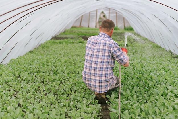 Мужчина ухаживает за рассадой капусты в домашней теплице.