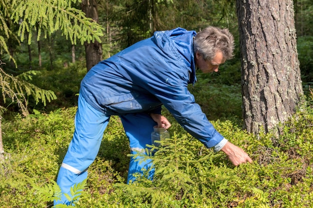男は森の中で有機ブルーベリーを収集します。