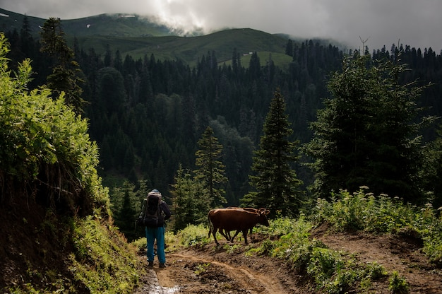 Man and cows standing on the hill on the background of the mountains covered with forests