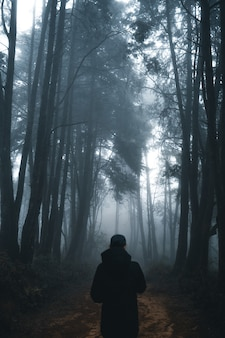 Man in the dark forest ,fog and pine forest in the winter tropical forest,fog and pine