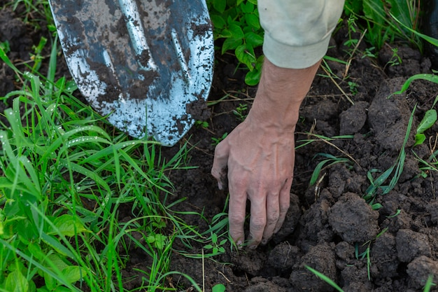 男は庭の地面を掘る。