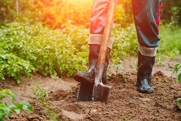 男は木を植えるために地面に穴を掘る