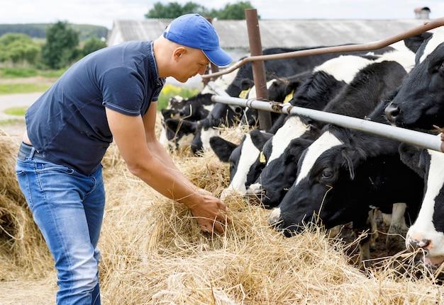 Фермер человек на ферме с дойной коровой