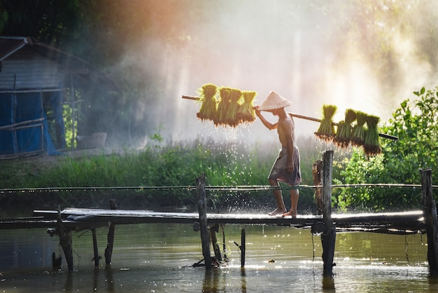 Man farmer thai holding rice baby on shoulder walking on wooden bridge plant farmland asia