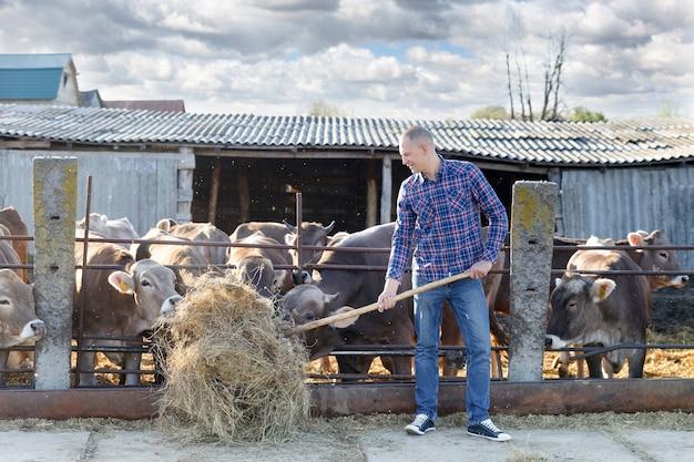 Человек кормит коров сеном на ферме на открытом воздухе