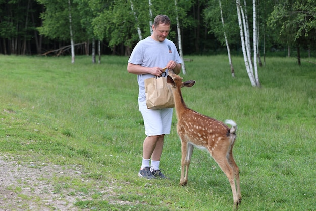 A man feeding cute sika deer bambi at contact zoo. happy traveler man enjoys socializing with wild animals in national park in summer.