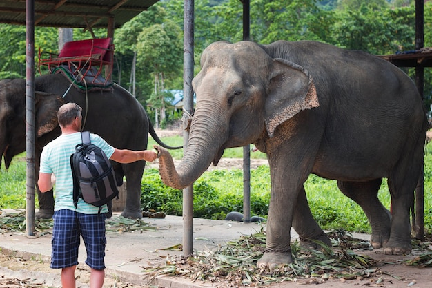 Мужчина кормит слона на слоновьей ферме в таиланде. вид спереди