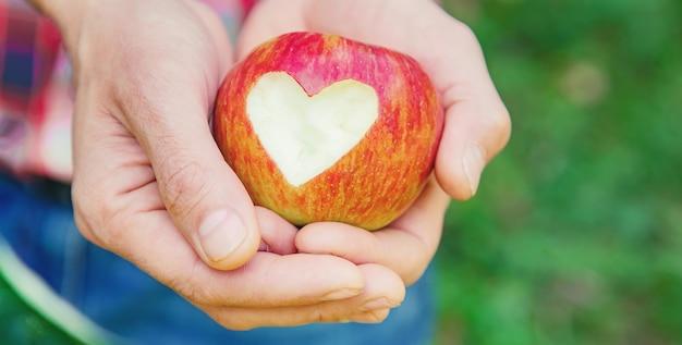 男庭師は庭の庭でリンゴを摘みます。セレクティブフォーカス。