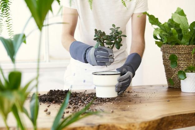 デザイン木製テーブルのセラミックポットに植物を移植する男の庭師。ホームガーデンのコンセプト。春の時間。植物がたくさんあるスタイリッシュなインテリア。観葉植物の世話をします。テンプレート。