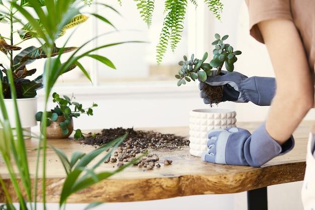 設計の木製テーブルの上のセラミック ポットに植物を移植する男性の庭師。家庭菜園のコンセプト。春の時間。植物をふんだんに使ったスタイリッシュな店内。家の植物の世話..