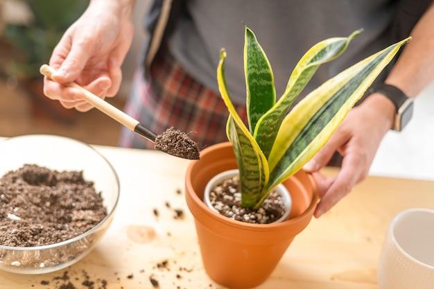 Садовники человек поливают растения