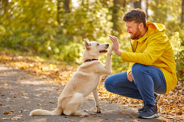 Man give high five to lovely pet dog in the forest
