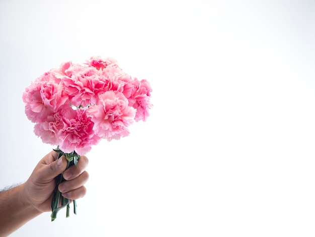 Man hand hold pink carnation on white background