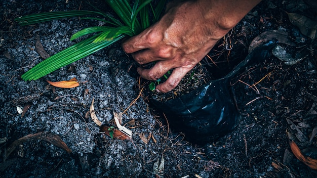 Man hand plant to grow in ground. man holding sprout and planting in the ground on working field. gardening, plant.