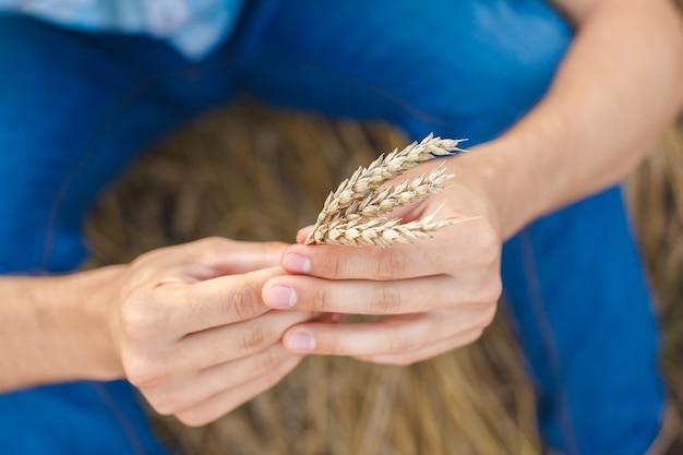 フィールド上の小麦の耳に触れる男の手