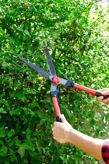 男の手は手剪定はさみで茂みの枝を切ります