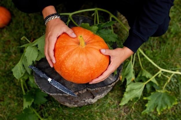 Руки человека держат тыкву перед резьбой на хэллоуин, готовит джек фонарь. украшение для вечеринки, вид сверху, крупным планом, вид сверху, копией пространства