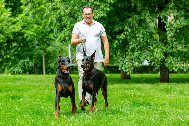Человек с удовольствием и играть со своими собаками в парке.