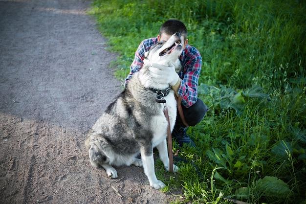 緑の芝生の近くの大きな灰色の犬の後ろに隠れている男。