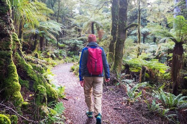 男のハイキング ベイ、森の中の小道。屋外自然レジャー ハイキング