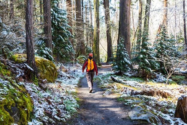 森の中の小道をハイキングする男。