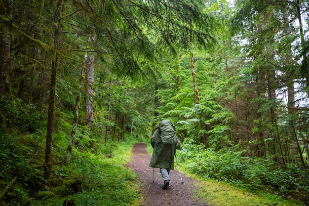 Man hiking bay the trail in the forest.nature leisure hike outdoor