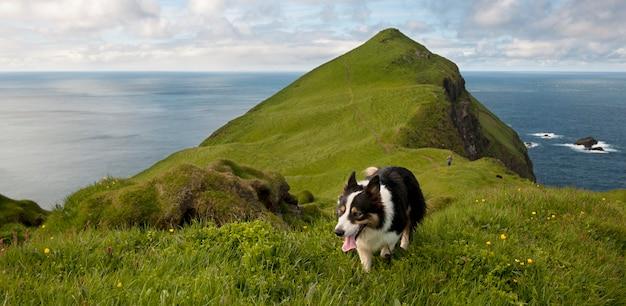Man and his dogs on mykines, faroe islands