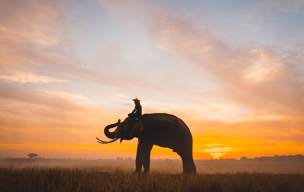 Man and his elephant working in the rice fields in northern thailand
