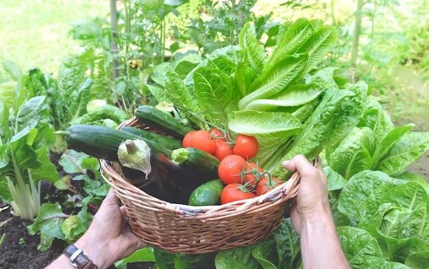Man holding a basket filled with freshly picked seasonal vegetables in the garden