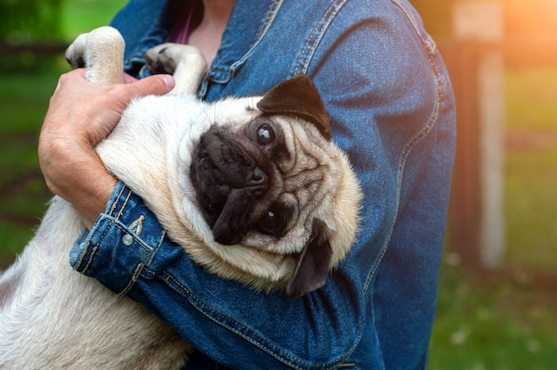 Man holding dog pug in hands at sunset outdoors