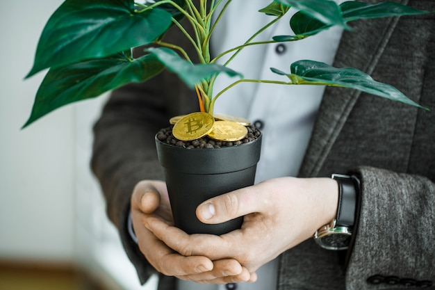 Man holding, house plant with coins of bitcoin on the ground