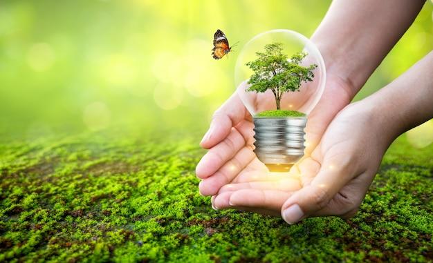 Человек, держащий лампочку с деревом внутри концептуального дерева охраны окружающей среды