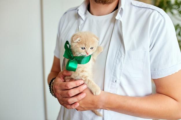 Man holding little kitten in hand, surprise presenting cat, make dream come true