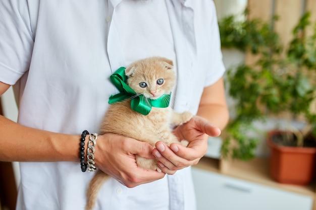 Man holding little kitten in hand, surprise presenting cat