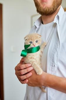 小さな子猫を手に持って男、驚きの提示猫