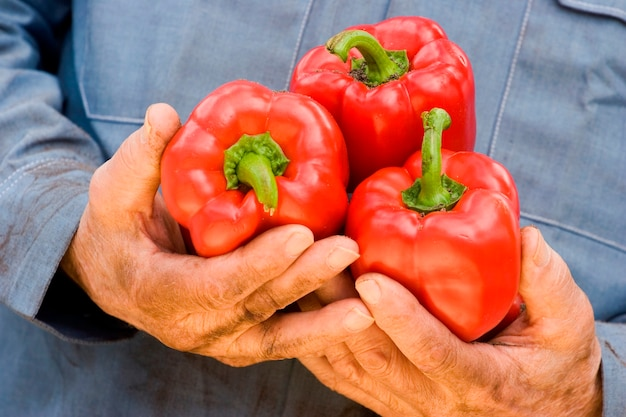 Man holding red bell pepper, close-up